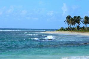 ile-paradisiaque-plage-palmiers
