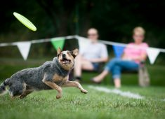 Dog enjoying frisbee